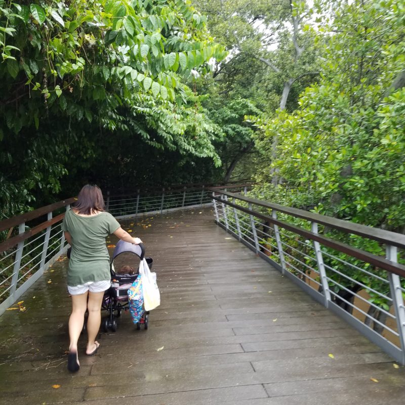 Singapore Nature Outings for Kids